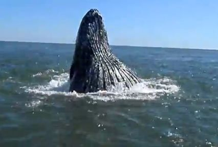 VIDEO: Humpback whales spotted off Rockaway shore