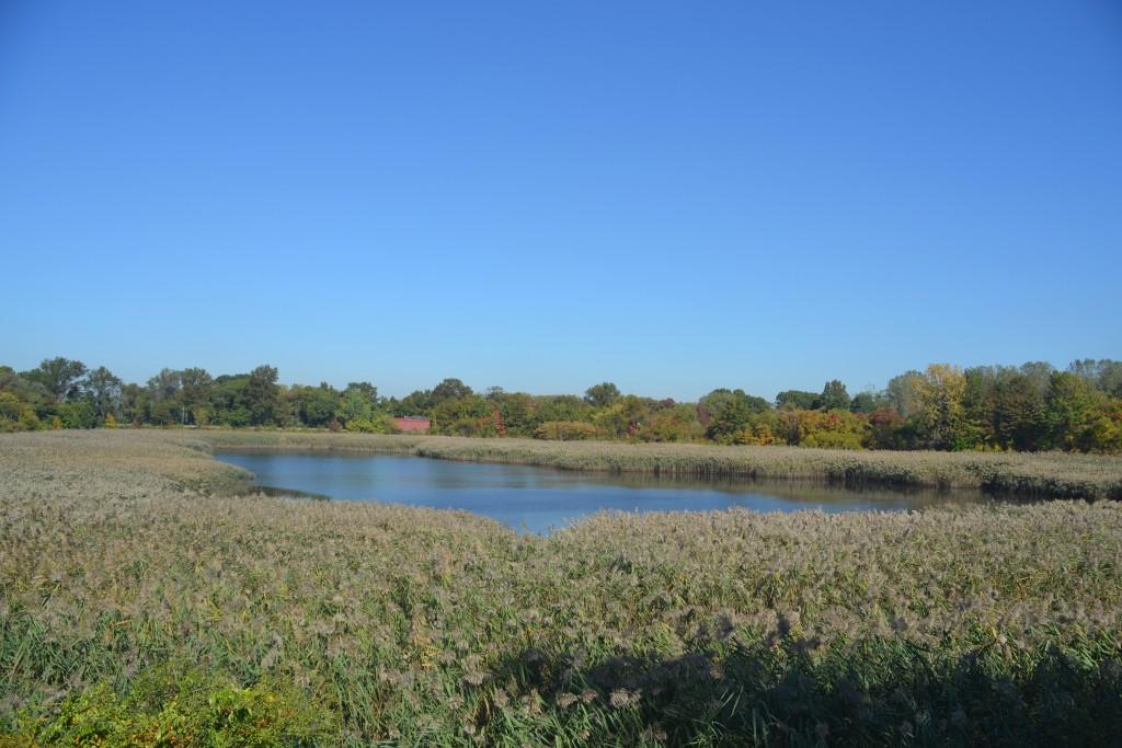 Assemblywoman supports Ridgewood Reservoir wetland push