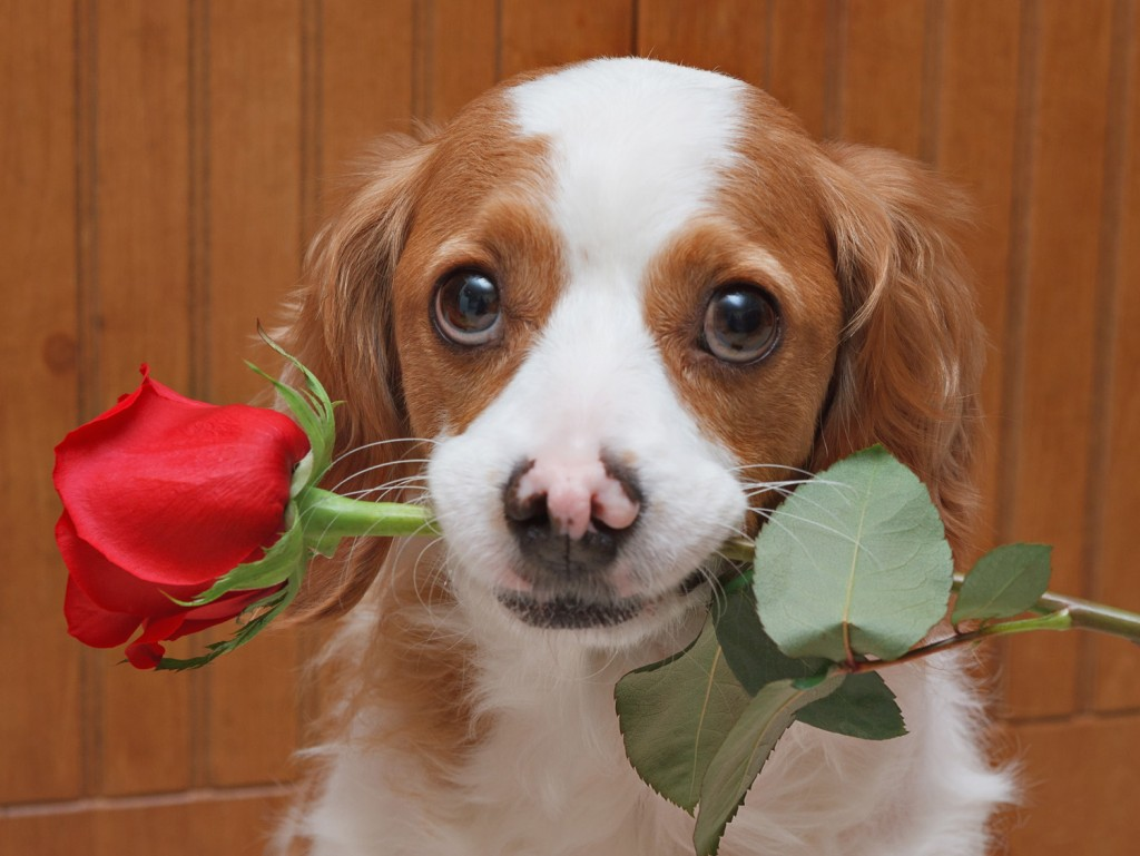 Want a bundle of unconditional love this Valentine's Day? Adopt a pup or a kitty
