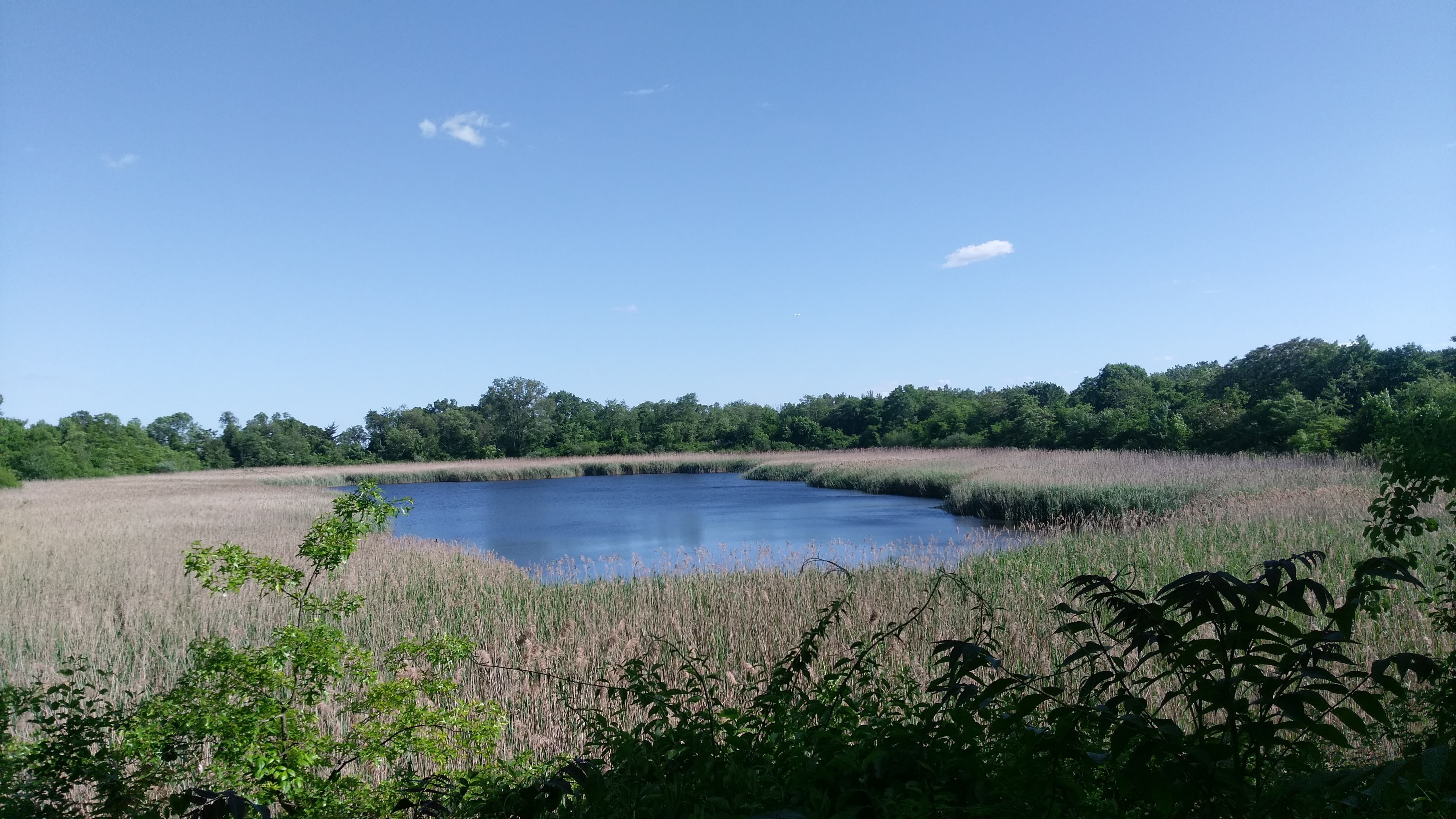 Ridgewood Reservoir will soon be added to the state Wetlands Map, preserving the site