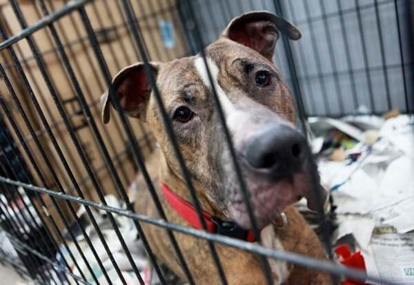 City Council passes law establishing animal shelters in each borough