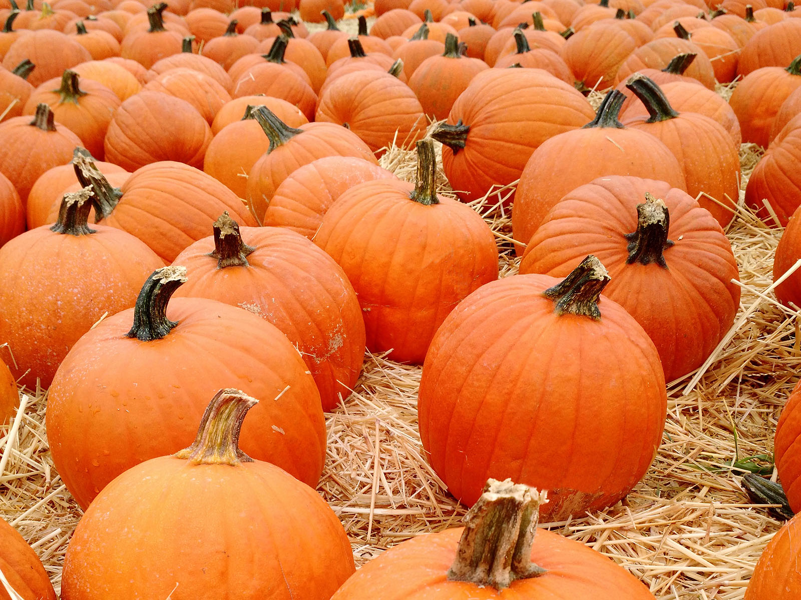 https://qns.com/wp-content/uploads/2019/10/pic_PumpkinPatch.jpg